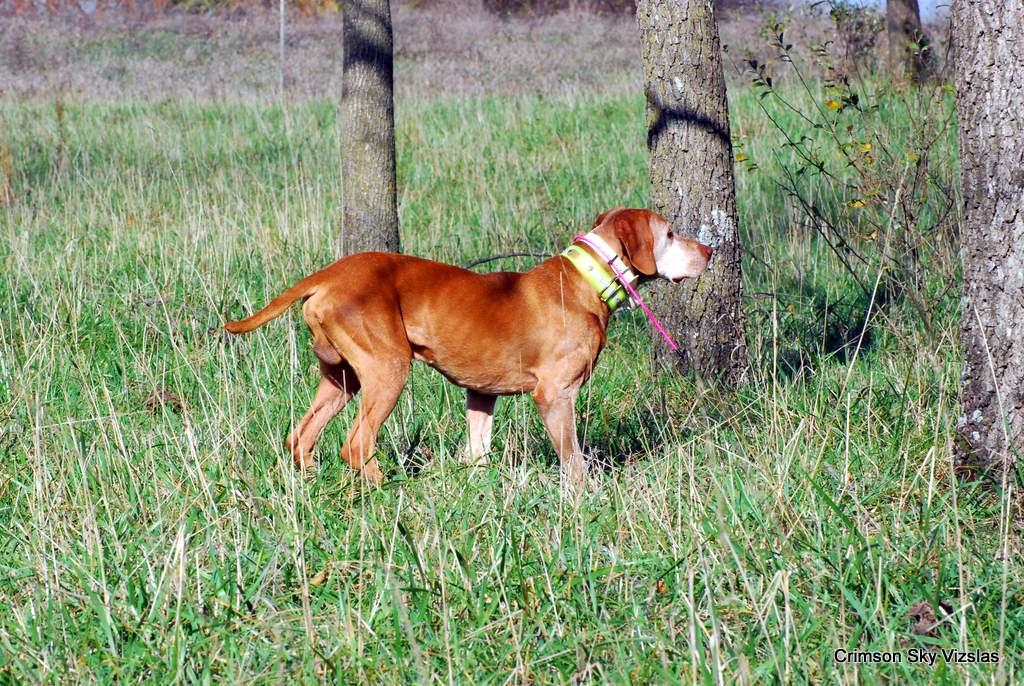 17-11-08 NAFC S2_06_Guy & Bull