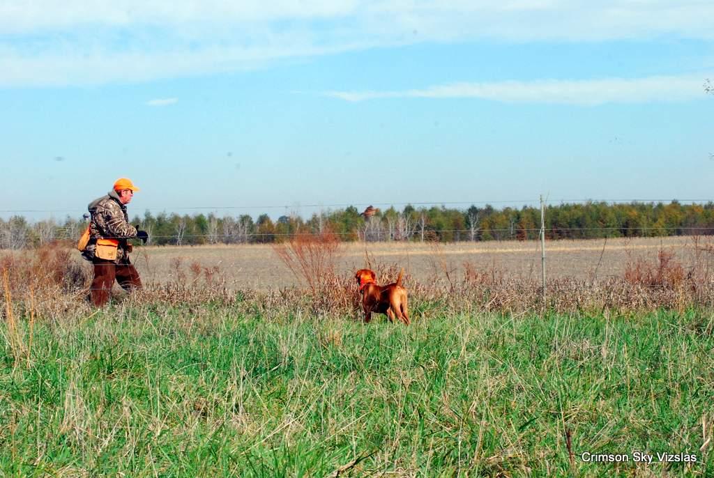17-11-08 NAFC S2_12_Guy & Bull
