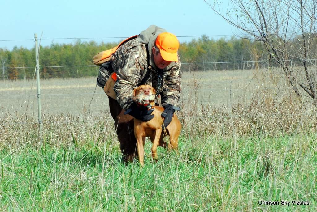 17-11-08 NAFC S2_14_Guy & Bull