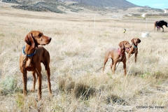 Vizsla Club America NAFC 2015 Mark Spurgeon's Camp