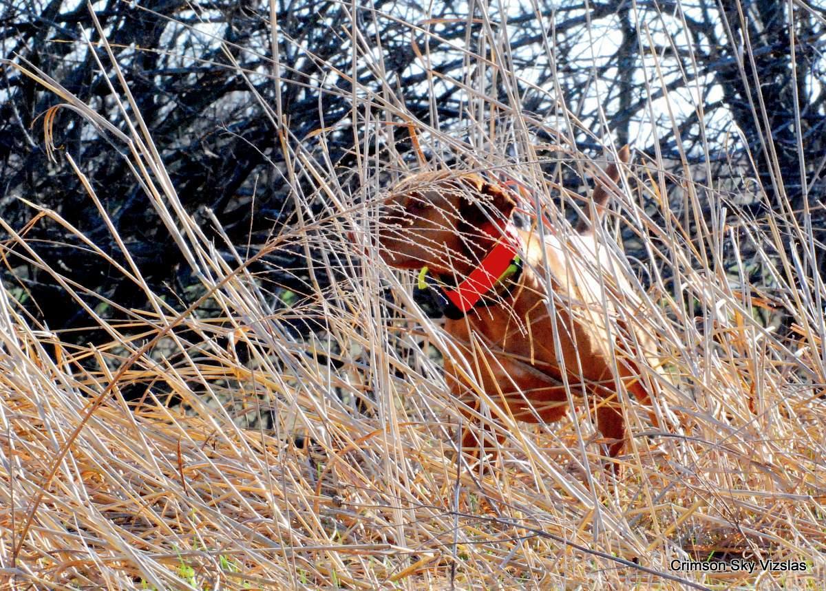 16-03-25 MVF 03_004_Cora & Rusty