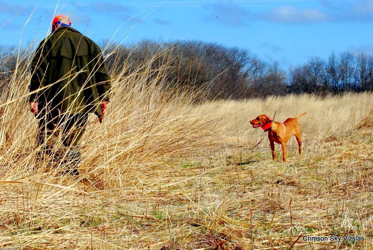 16-03-25 MVF 03_020_Cora & Rusty