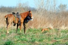 16-03-25 MVF 03_002_Cora & Rusty