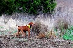 17-11-06 NAFC 8_14_Raider & Zoey