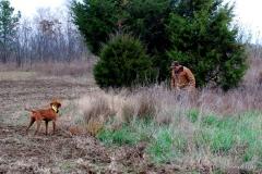 17-11-06 NAFC 8_15_Raider & Zoey