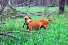 17-11-06 NAFC 9_06_Bull & Mia