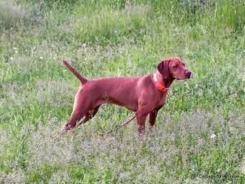 06-08-08 dog training030