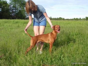 06-08-08 dog training019