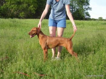 06-08-08 dog training021