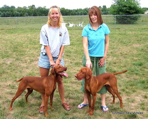 vizsla training