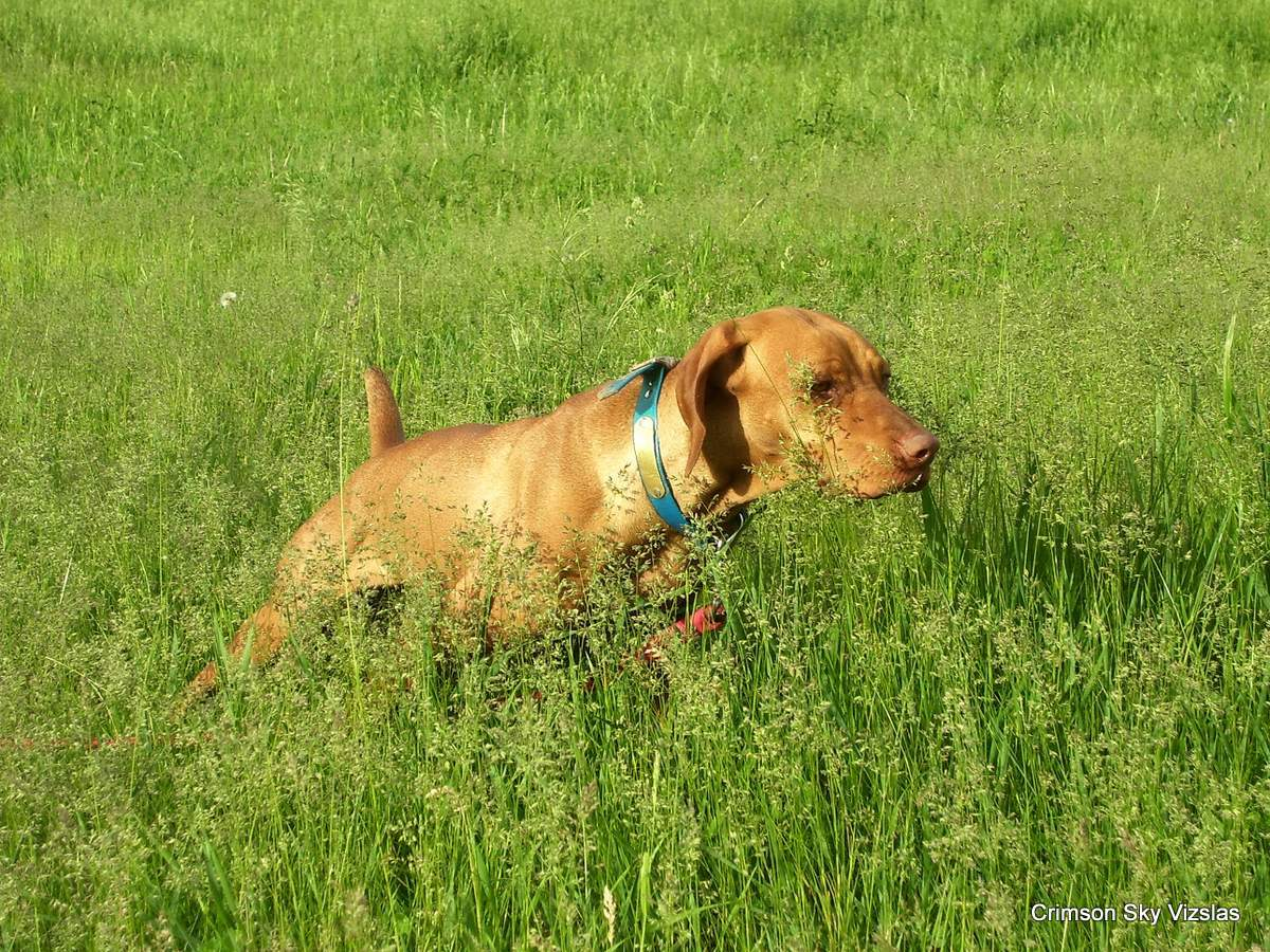 06-08-08 dog training008