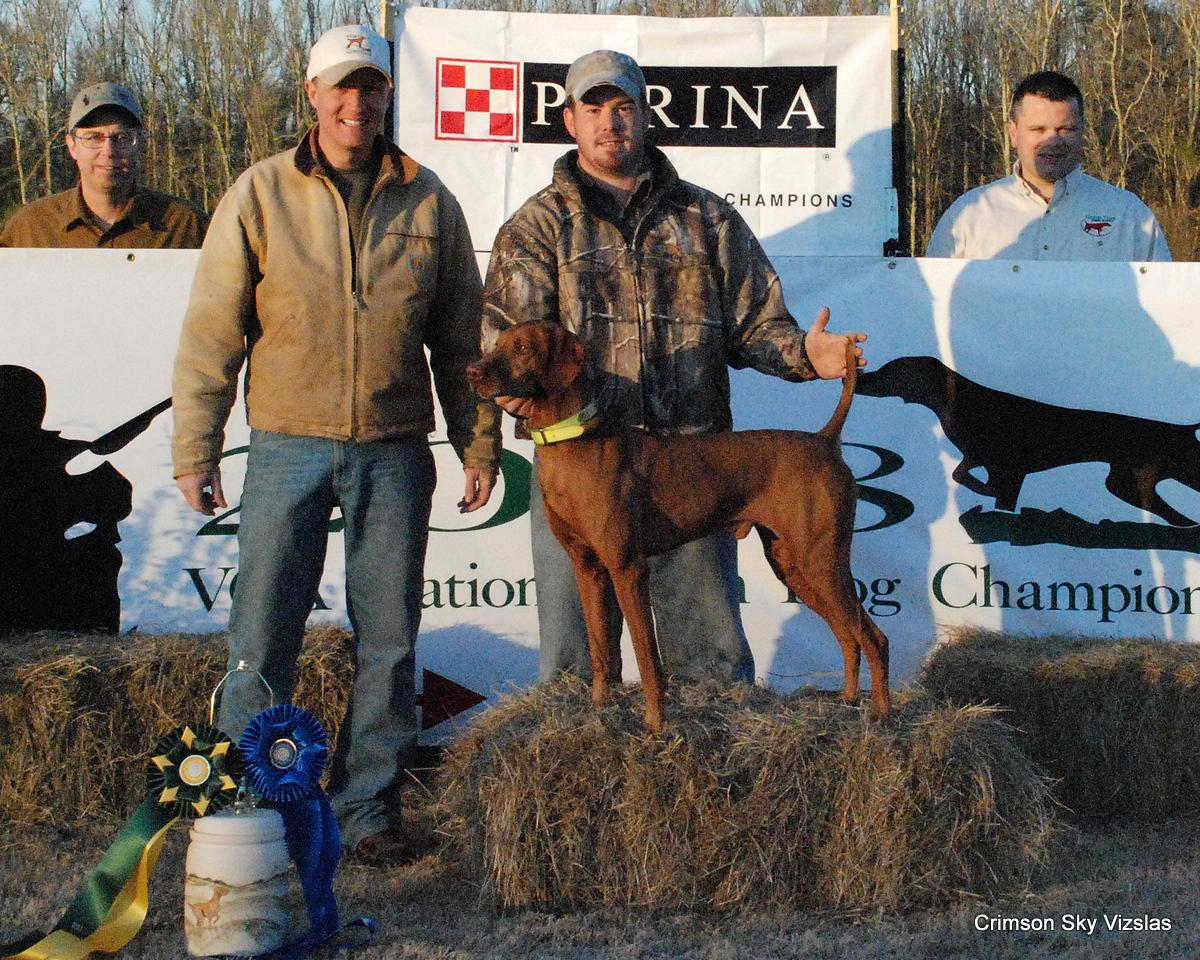 Vizsla Club of America National Gundog Championship 2008