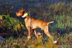 12-10-14 NAFC _165_112 Ace Bogart
