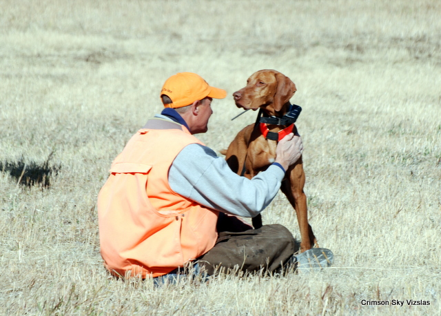Mark and Gauge before the castoff, Vizsla Club America NFC 2015