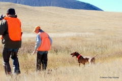 Gauge ready to retrieve, Vizsla Club America NFC 2015