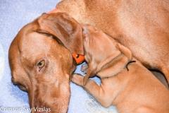 2018-06-03 Twerk / Chase Puppies