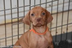 2018-06-29 Twerk / Chase Puppies