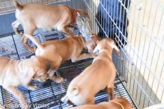 2018-06-30 Twerk / Chase Puppies