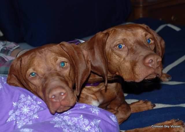11-02-14 Izzy Dakota & Hailey03