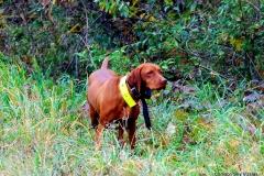 12-10-14 NAFC _149_10 Roxie Izzy