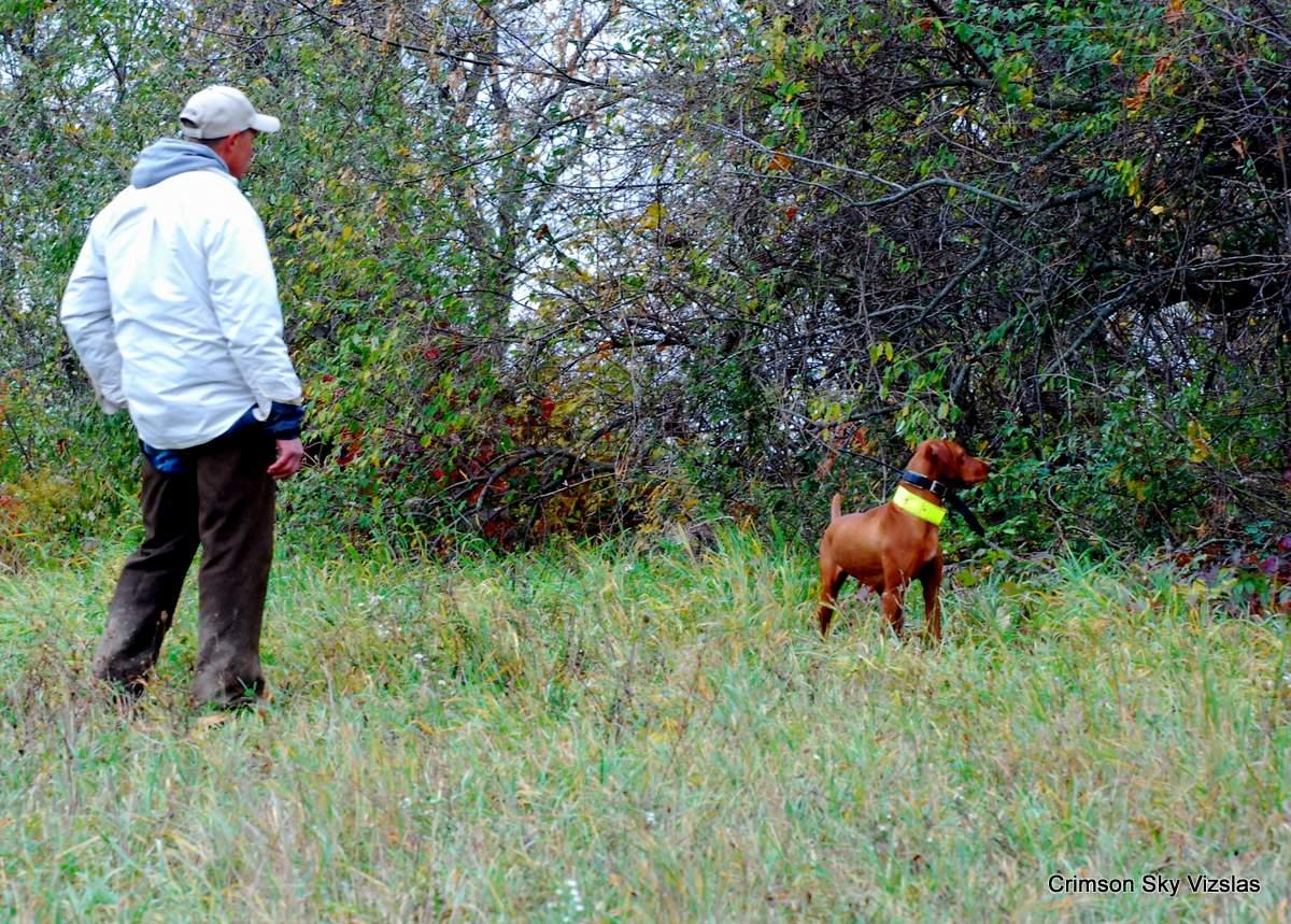 12-10-14 NAFC _153_10 Roxie Izzy