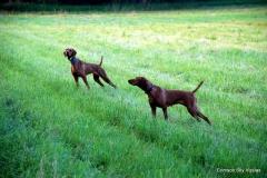 13-07-09 01 Gauge & Izzy