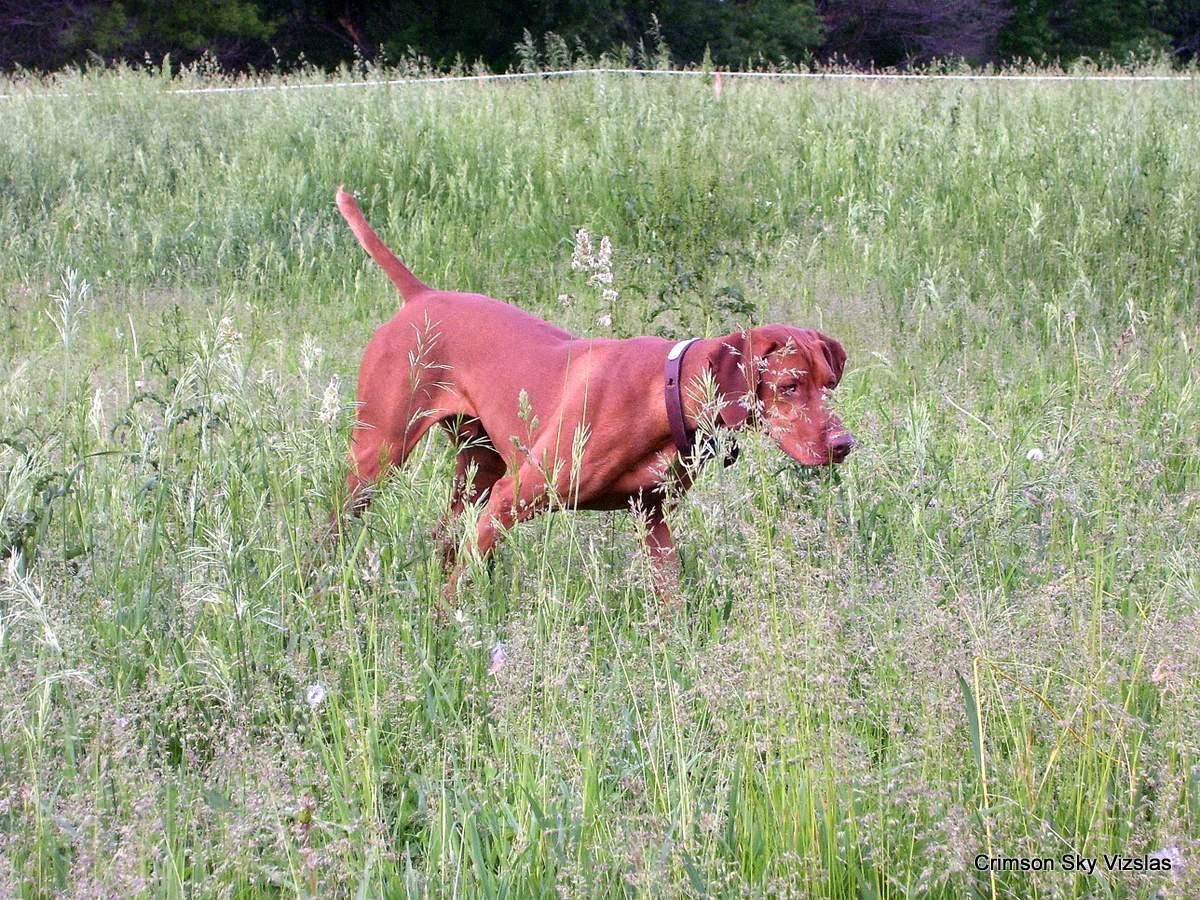 06-08-08 dog training032