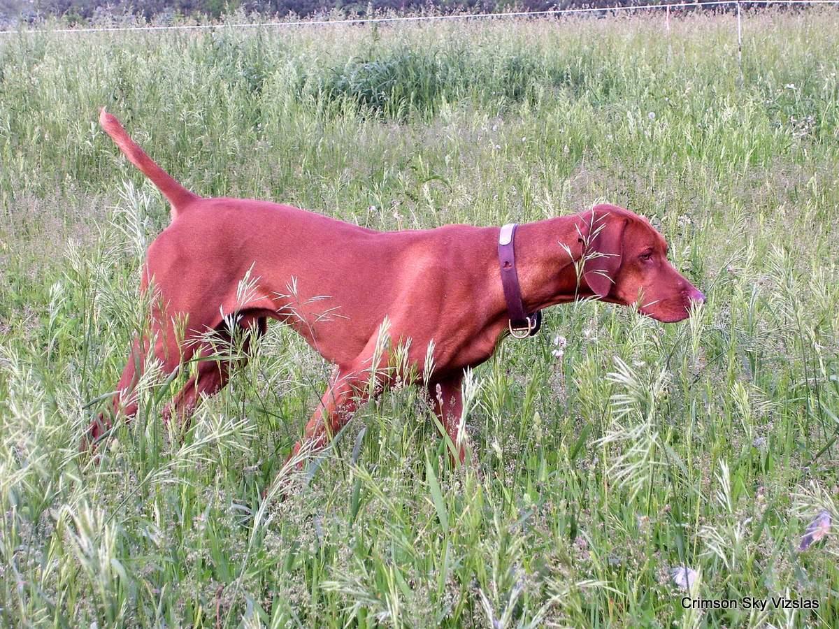 06-08-08 dog training034