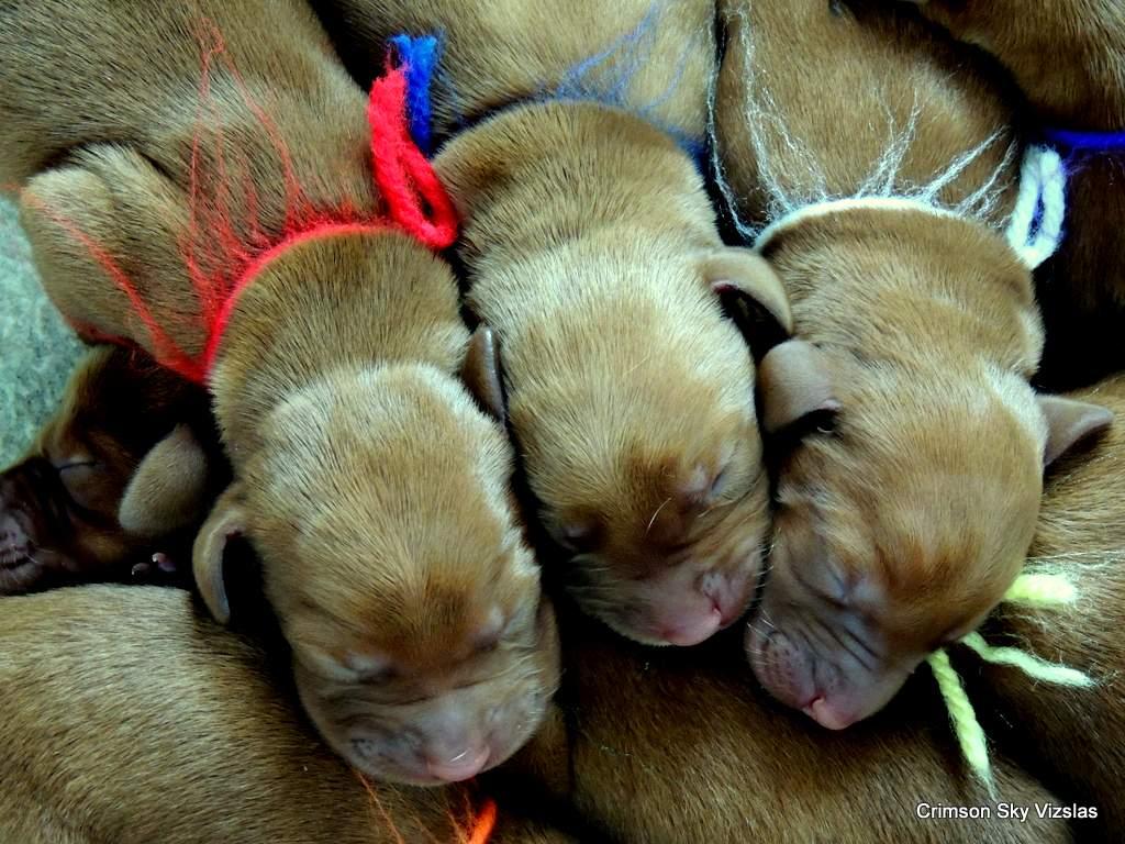 2017-07-20 Casey 021 Gauge pups