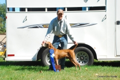 Ruger wins Gordon Setter Club of America 29 dog stake