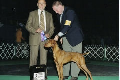 Ruger in the show ring