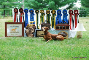 Ruger and some National trophies