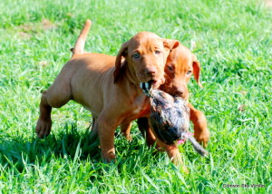 Izzy Ruger Pups 3-28-12