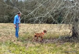 Mark with Rose at South Louisiana Vizsla Club
