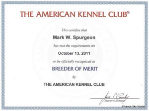 Akc Vizsla breeder of merit 01